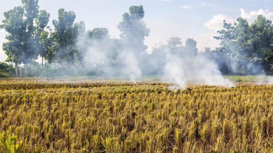 Stubble burn - Reason for air pollution