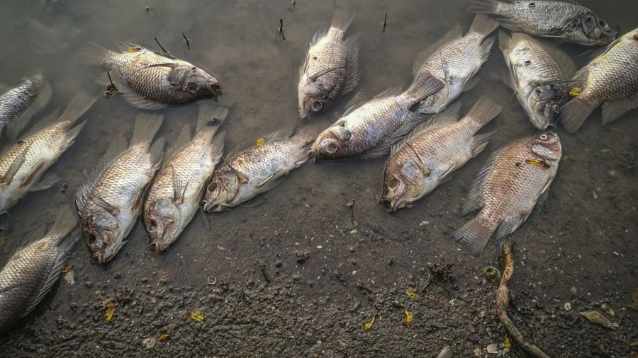 Water pollution effects on aquatic life